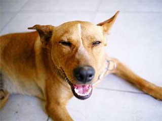 Reclusas del Buen Pastor podrán adoptar perros